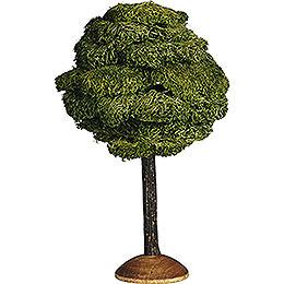Broad Leaf - 17 cm / 6.7 inch
