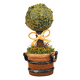 Miniature Boxwood - Set of Three - 6 cm / 2,5 inch