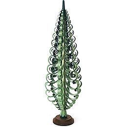 Spanbaum grün - 50 cm