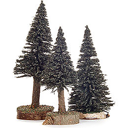 Spruce - Green - 3 pieces - 12 cm / 4.7 inch to 16 cm / 6.3 inch